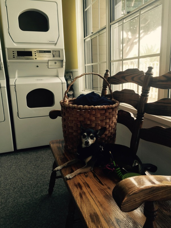 Laundry Day with Pico